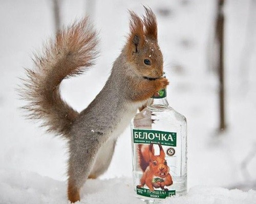 Vodka 'Squirrel'. squirrel is the synonym of delirium in Russian language