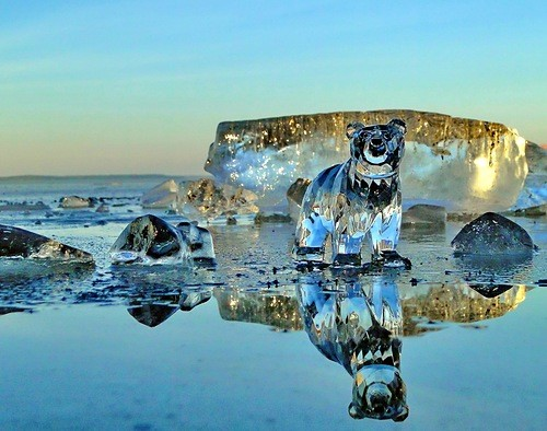 Bear on Seliger, Ice Russia