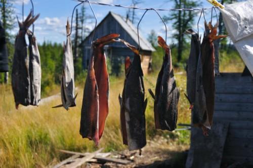 Locals dry the caught fish