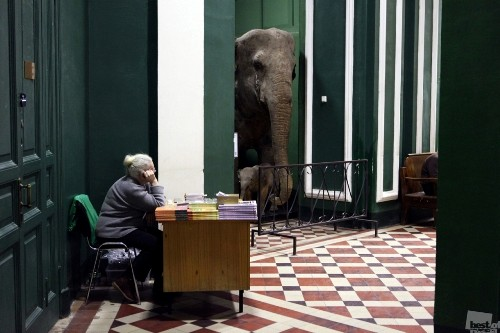 Elephant. Photographer Xenia Tsykunova. Moscow