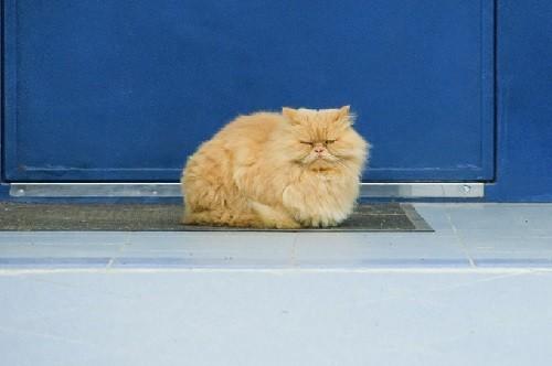 Raifa monastery cat