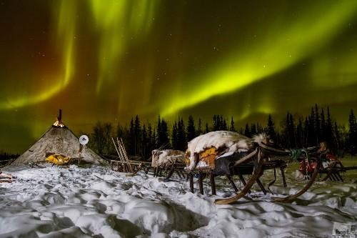 Wintering. Photographer Alexander Fedorov. Meskashor