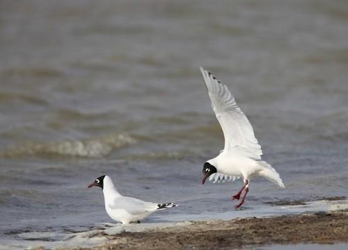 Zun-Torey birds