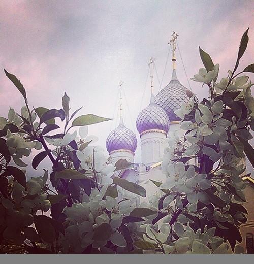 Apple flowers on the background of the Rostov Kremlin
