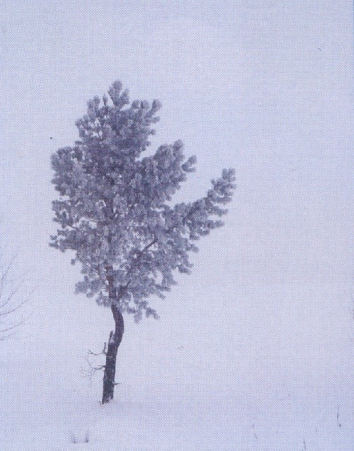 Lonely tree in the winter landscape