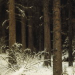 Spruce forest in winter. 1884