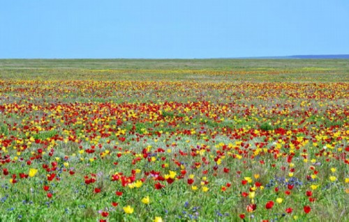 wildflowers and Crimean spring tulips add new colors to the amazing landscape