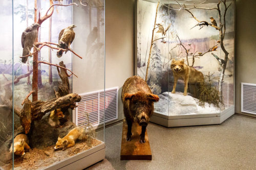 Prioksko-Terrasny Reserve in the Moscow Region Museum of Nature