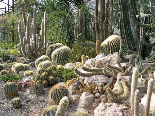 Cactus greenhouse. Nikitsky Botanical Garden