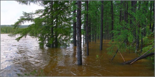 High water in spring, flooded trees