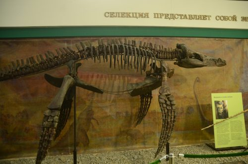 Exhibitions of dinosaurs