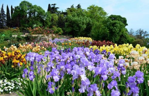 Nikitsky Botanical Garden in Yalta