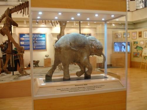 Museum named after Shemanovsky and baby mammoth Lyuba