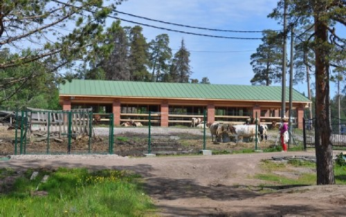There is a farm on Valaam that produces cheeses and other dairy products. Everyone is offered milk and some herbal drinks.