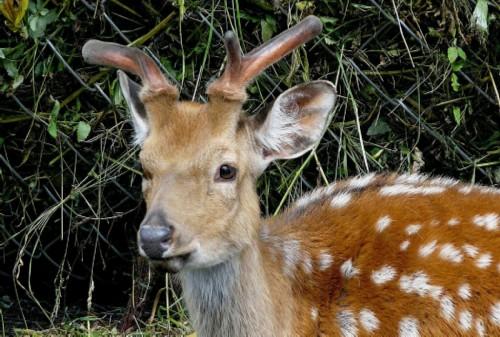 Zyuratkul National Park