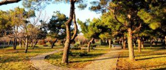 Park Nut Grove in Anapa