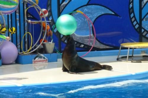 Seal performance