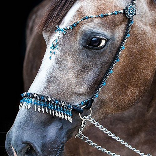 The halter is a bridle without a bit