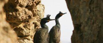 Amazing birds in the Karadag nature reserve