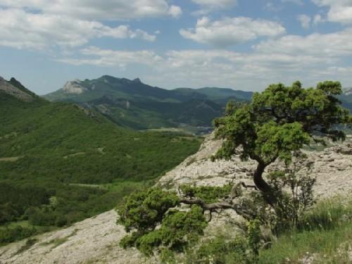 Karadag nature reserve. Deltoid juniper