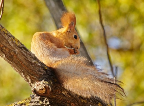Squirrel in the reserve