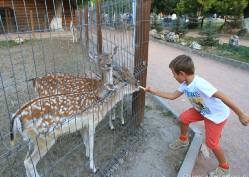 Zoo on site